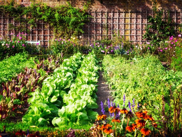 Comment concevoir un jardin écologique ?
